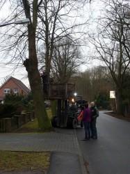 Radweg Steimker Straße / Fällung von Linden