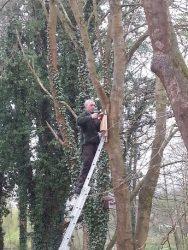 Fledermauskästen für verlorene Quartiere durch Baumfällungen