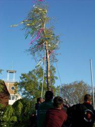 Maibaum aufstellen Brome